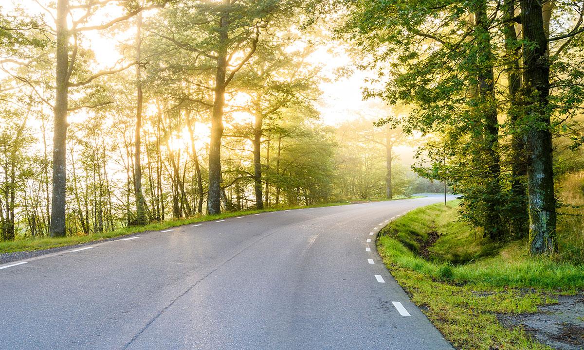 En väg  som försvinner i horisonten, träd på båda sidorna.